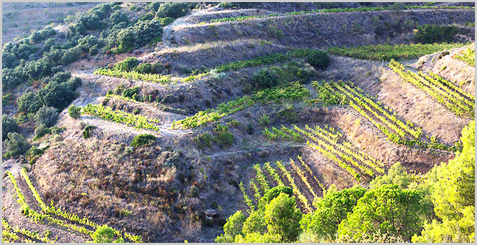Priorat wine region